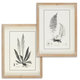 The Gerson Company Set of Two 15.75in H Black and White Fern Art in Wooden Frames
