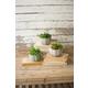 Home Accent Artificial Succulents (Set of 3)