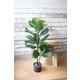 Home Accent Artificial Fiddle Leaf Plant