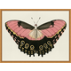 Giclee Butterfly Wall Art