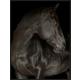 Giclee Black Stallion Wall Art