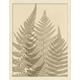 Giclee Sepia Ferns Wall Art