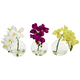 "Home Accent 9"" Phalaenopsis Orchid Artificial Arrangement (Set of 3)"