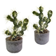 Home Accent Cactus Potted (Set of 2)