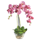 Home Accent Phalaenopsis with Glass Vase