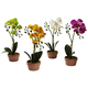 Home Accent Phalaenopsis Orchid with Clay Vase (Set of 4)