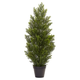 Home Accent 3' Mini Cedar Pine Tree (Indoor/Outdoor)