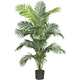 Home Accents 6' Paradise Palm