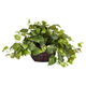 Home Accents Pothos with Decorative Vase Silk Plant