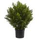 Home Accents 2' Cedar Bush (Indoor/Outdoor)