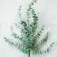 Artificial Eucalyptus Stem (Box of 6)