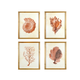 Creative Co-Op Wood Framed Wall Art with Red Shells and Coral (Set of 4 Designs)