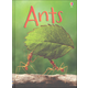 Ants (Usborne Beginners)
