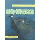 Shipwrecks (100 Facts You Should Know)