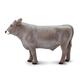 Brown Swiss Bull (Safari Farm)