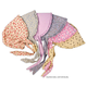 Print Bonnet - Baby (assorted colors/styles)