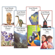 Apologetics Press Early Reader Set