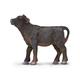 Black Angus Calf (Safari Farm)