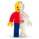 4D Vision Brick Man Anatomy Model