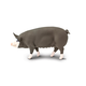 Berkshire Pig (Safari Farm)