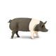 Hampshire Pig (Safari Farm)