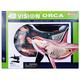 4D Vision Orca Anatomy Model