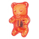 Gummi Bear Anatomy Model (Red)