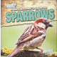Bird Watcher's Guide to Sparrows (Backyard Bird Watchers)