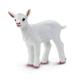 Kid Goat (Safari Farm)