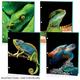 Reptiles Dimensional Portfolio Assorted Design