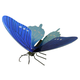 Pipevine Swallowtail Butterfly (Mtl Earth 3D)