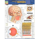 Anatomy of the Senses Quick Study