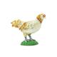 Ameraucana Chicken (Safari Farm)