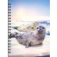 3D Lenticular Notebook: Harbor Seal
