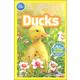 Ducks (National Geographic Reader Pre-Reader)