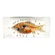 Fish Life Cycle Dissection Product