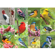 Birds of a Feather Puzzle (500 pieces)