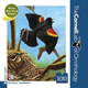 Red-Winged Blackbird-100pc Mini Pzzl(Cornell)