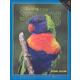 Building Spelling Skills 4 Workbook 2ED