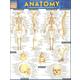 Anatomy 1 Quick Study