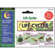 Life Cycles Science Mini Bulletin Board