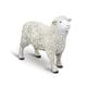 Sheep (Safari Farm)