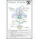 Plant Parts Laminated Card