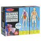 Human Anatomy Floor Puzzle (4 ft. tall)