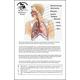 Respiratory System - 6 x 9 Chart