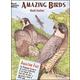Amazing Birds Coloring Book