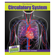 Human Circulatory System (Inside Guide: Human Body Systems)