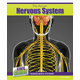 Human Nervous System (Inside Guide: Human Body Systems)