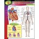 Human Body Cardiovascular Learning Chart