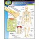 Human Body Skeletal System Learning Chart